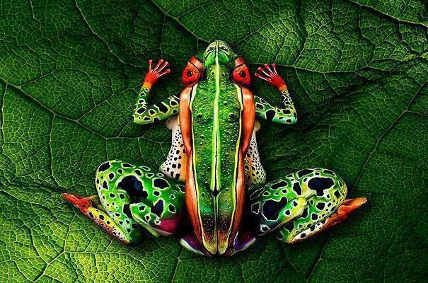 A body painter, Johannes Stoetter created this tree frog using five human models. Can you find all five !