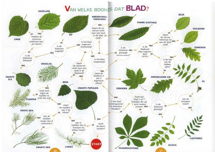 zoekkaart bladeren