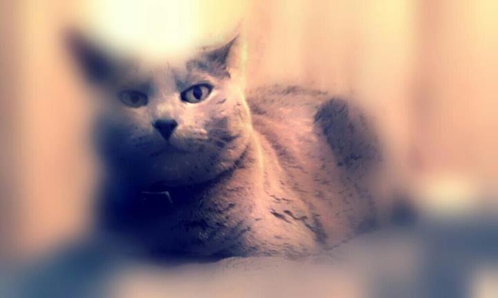 Sasha my princess