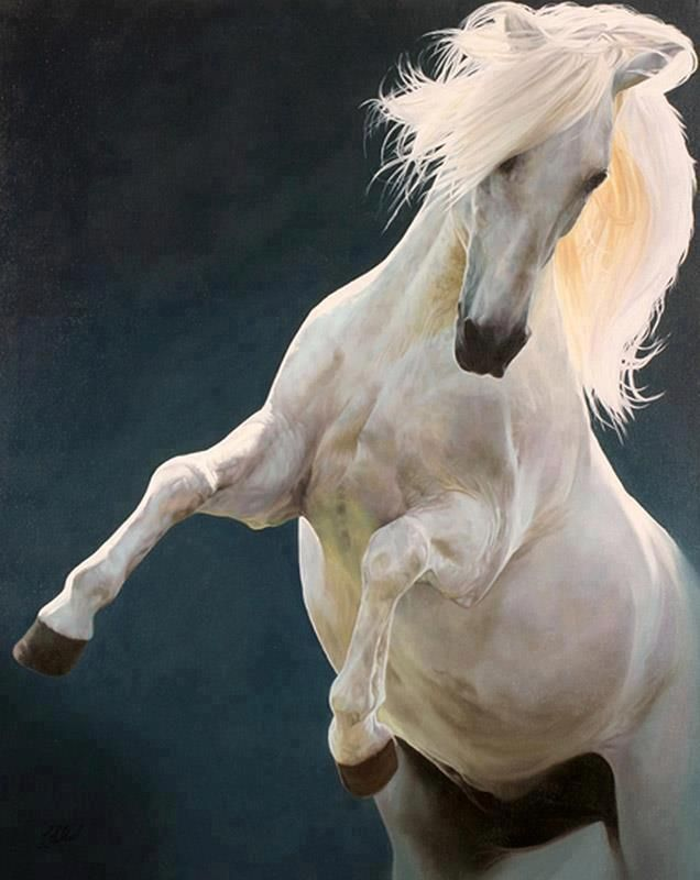 animalgazing:    Lord of The Rings Shadowfax star horse 'Blanco'  Photographer unknown