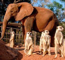 Elephant Sanctuary, Haartbeespoort