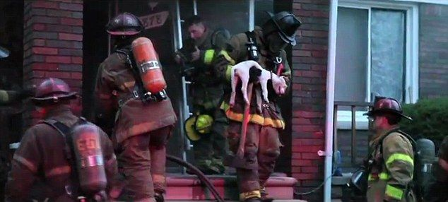 The moment selfless firefighter resuscitates dog after removing his OWN oxygen mask to save dying animalBrave Firefighters, Brave Soul, Dogs Animal, Animal Funnies, Andther, Animal Respect, Burning, Animal Caught, Animal Funny