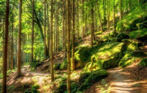 green nature wallpaper hd