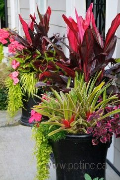 todd holloway container gardening
