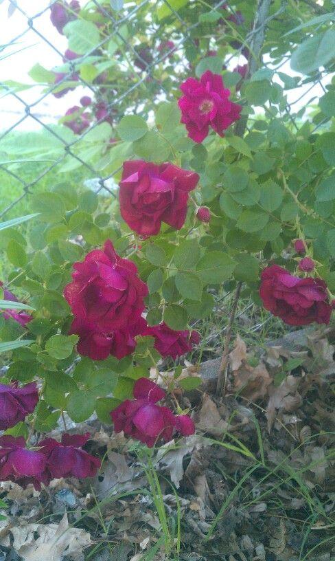 More of the random bush