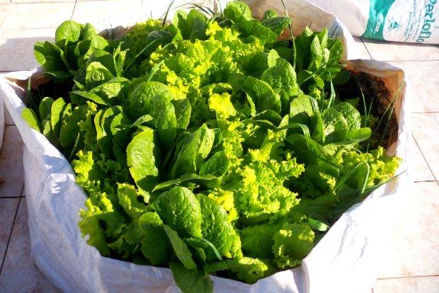 Μια προσεκτική ματιά στο μποστάνι μας τώρα, μέσα στο καταχείμωνο: ποια λαχανικά…