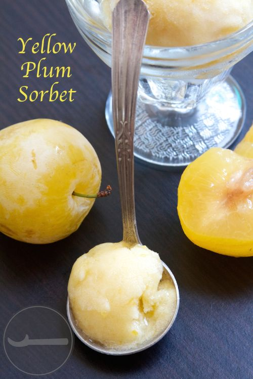Juicy and bright Yellow Plum Sorbet - Scoop Adventures
