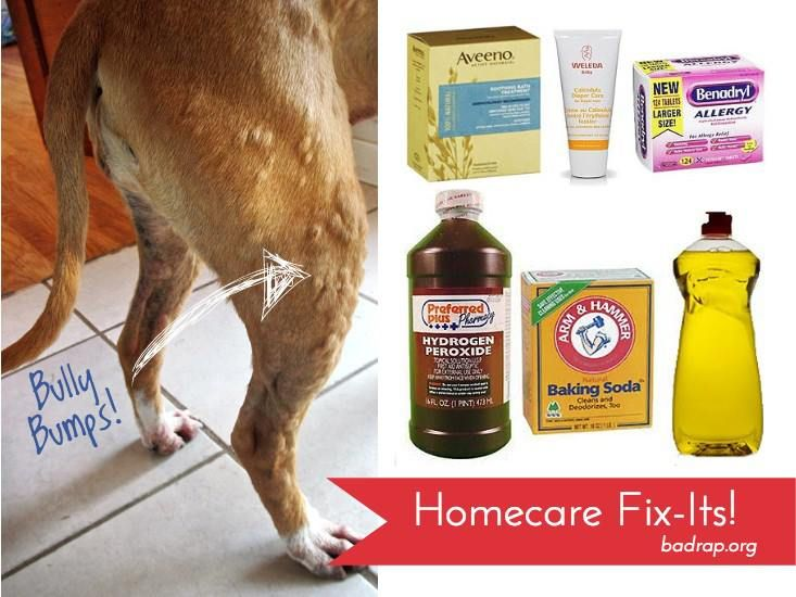 Natural Remedies For Hives In Dogs