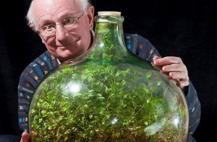 Δεν έχει ποτίσει το φυτό μέσα στο σφραγισμένο μπουκάλι από το 1972. Και είναι ακόμη ζωντανό!