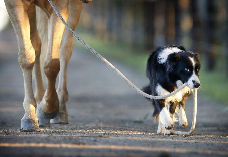 7 Fatos incríveis sobre seu cachorro que você não sabia #Animais #Cães #Cachorro #Fatos #Curiosidades https://www.portaldicasdevo.com.br/artigo/7-fatos-incriveis-sobre-seu-cachorro-que-voce-nao-sabia