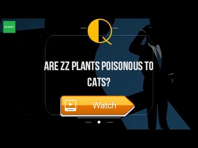 best 25 plante crassula ideas on pinterest. Black Bedroom Furniture Sets. Home Design Ideas