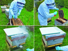 The Best Way To Kill Varroa With Oxalic Acid by Frances L.W. Ratnieks, Luciano Scandian, Hasan Al Toufailia Summary LASI research shows that of...