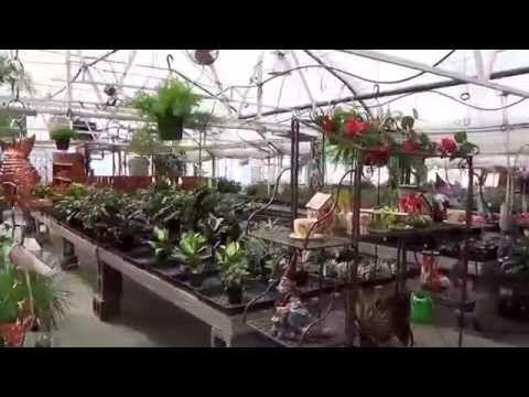 #373 США Аляска Анкоридж Питомник растений и удивительный магазин Bell's Nursery - YouTube