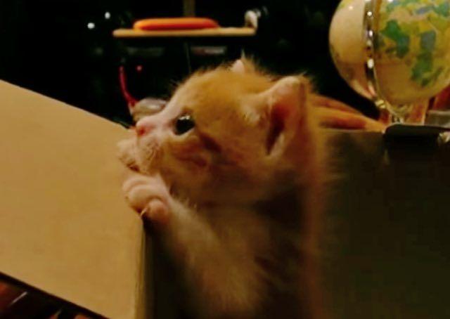 Více Než Nejlepších Nápadů Na Pinterestu Na Téma Rescue Ferret - Rescued kitten adopted by ferrets now thinks shes a ferret too