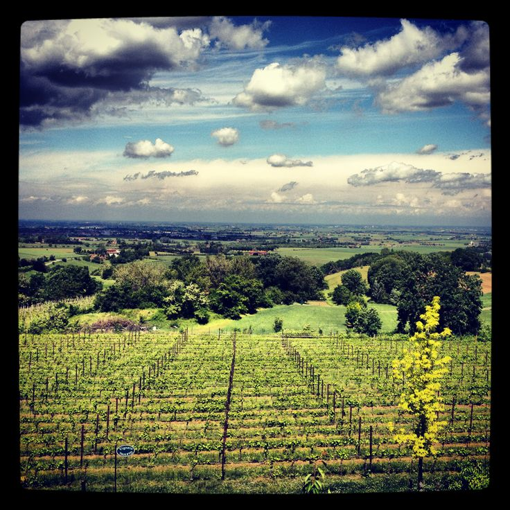 A #sunny day on our #vineyards #umbertocesari