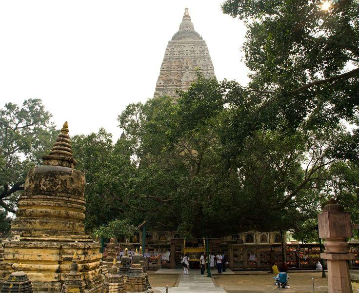 bodhi ağacı - Mahabodhi tapınağı