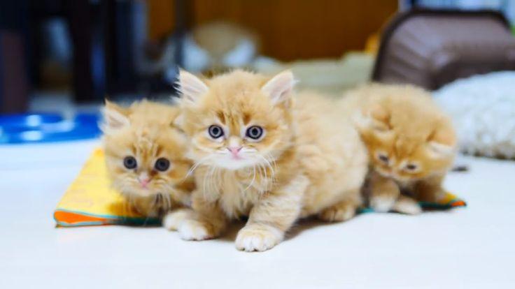 Die meisten entzückenden Kätzchen-Momente   – Cats