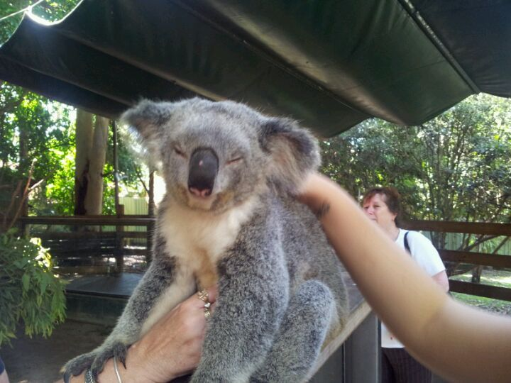 I lived near and went to school with the McNamarra family of the Koala Park Sanctuary West Pennant Hills Australia