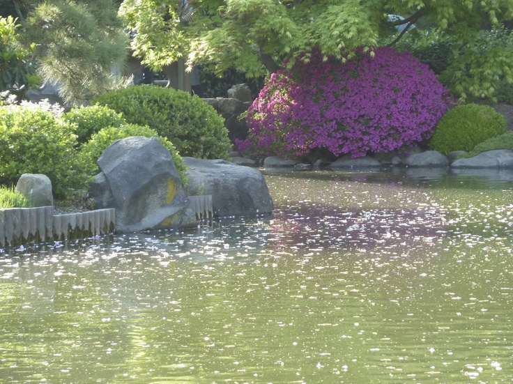 A quiet pond reflecting the colors of spring; Brooklyn Botanical Gardens.
