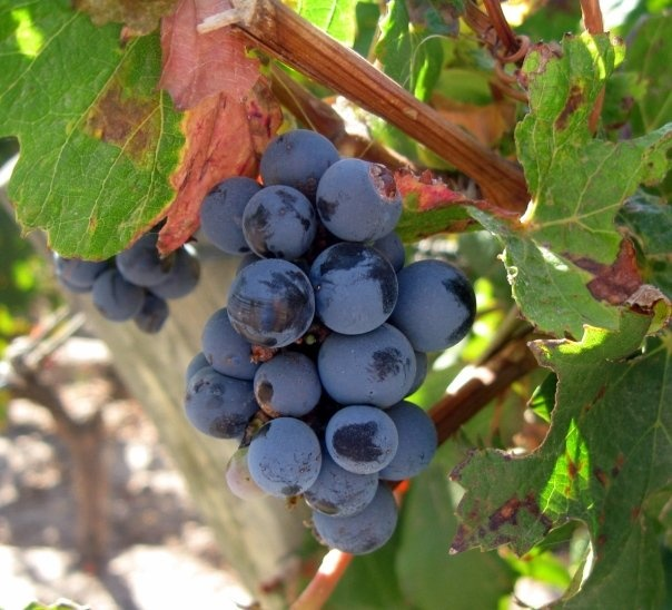 Blog: Explore South America's Wine Trails