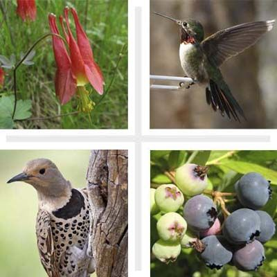 Plants for Backyard Birds - Encourage birds to nest in your yard by planting a habitat garden featuring their favorite plants l This Old House