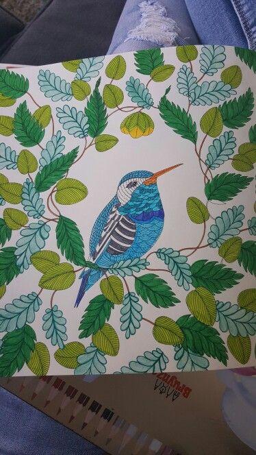 Dierenrijk kleurboek, kleuren voor volwassenen