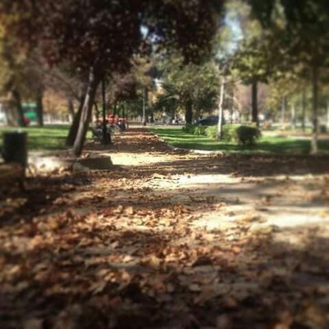 Parque Forestal Santiago de Chile.. ⛅