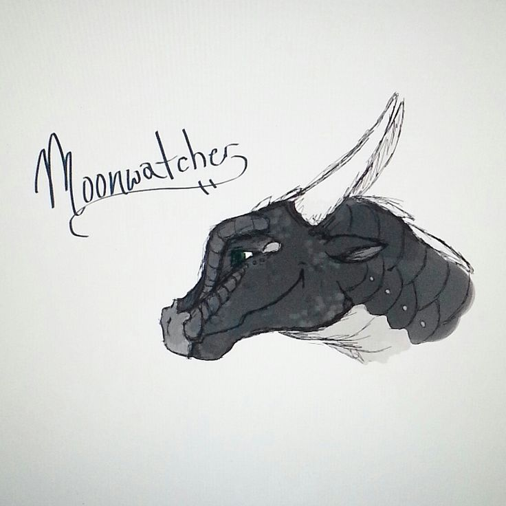 Wings of Fire, Moonwatcher drawing