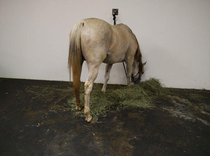 Jannis Kounellis's  Untitled (12 Horses) as closing act at Gavin Brown Enterprise, Greenwich Village.