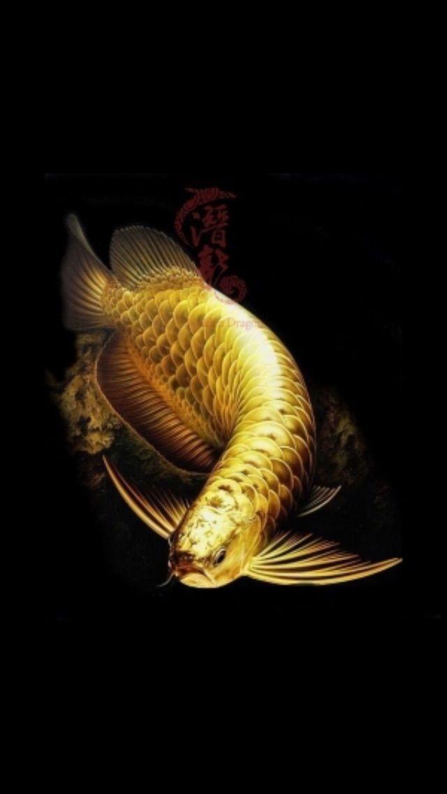 Heaven Ikan Akuarium Ikan Cupang Hewan