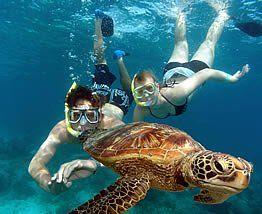 Snorkeling in John Pennekamp Coral Reef, Key Largo FL