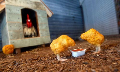 photo nugget poulet humour insolite
