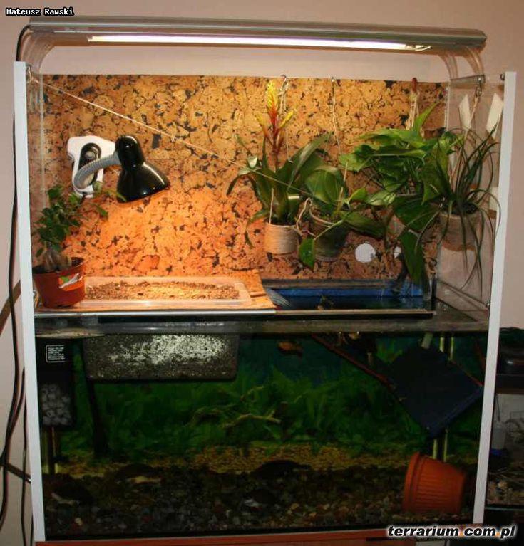 Turtle tanks, Turtle care and Turtles on Pinterest