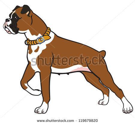 Boxer Good Beginner Dog