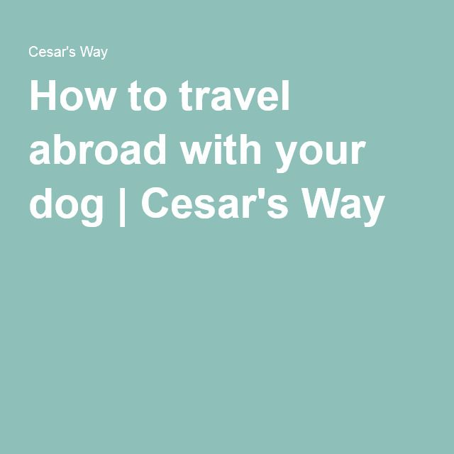 How to travel abroad with your dog | Cesar's Way