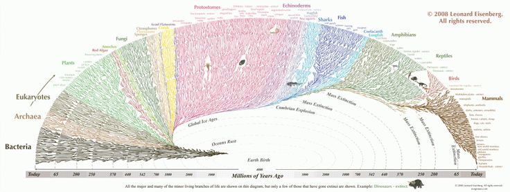 This Evolution Graphic Will Make You Feel Tiny