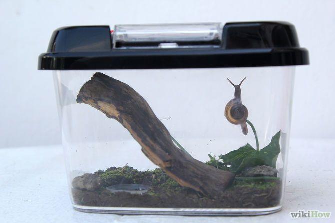 Keep a Pet Snail Step 6