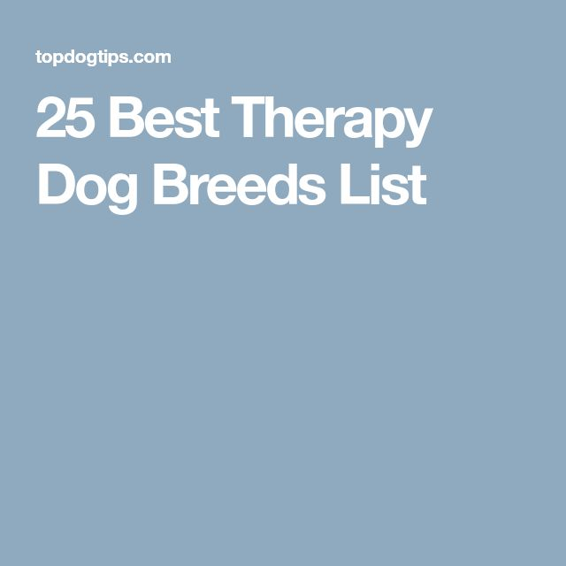 25 Best Therapy Dog Breeds List