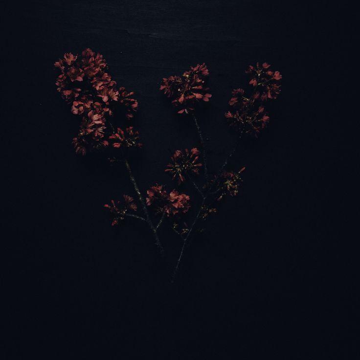 blossom  photography by Rakai Karaitiana @ aroha and friends