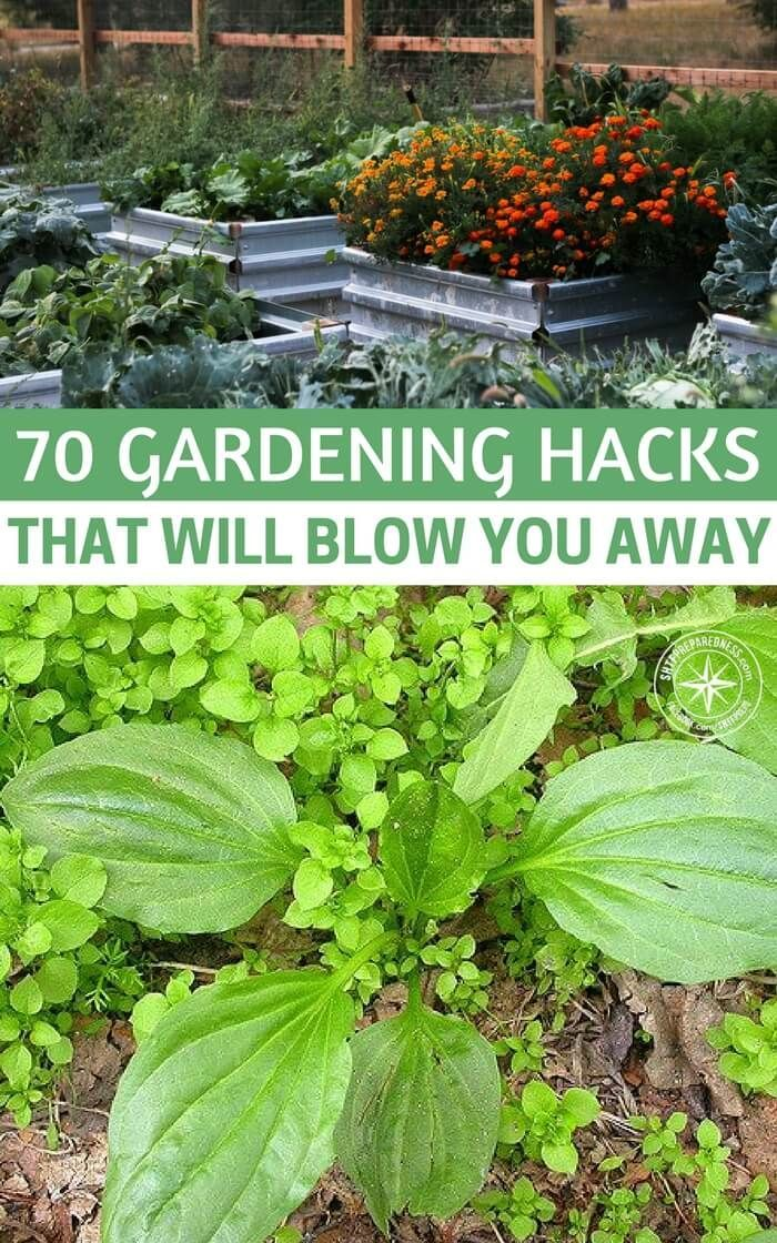 70 Gardening Hacks That Will Blow You Away Diy Garden Projects