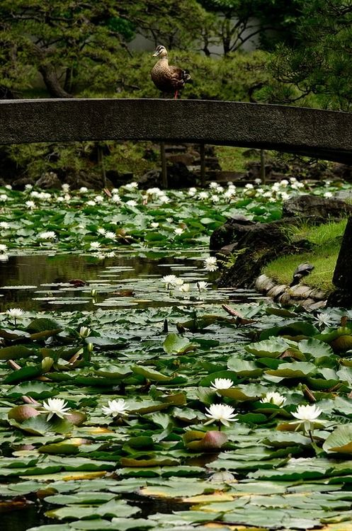 17 best images about life on the pond on pinterest for Garden pond life