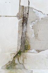 Mold damage roof leak abandoned