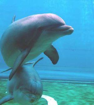 Delfini parlanti, presto potremo comunicare con loro http://alessandroelia.com/delfini-parlanti-uomo/ #scienza #natura #biologia #interessante