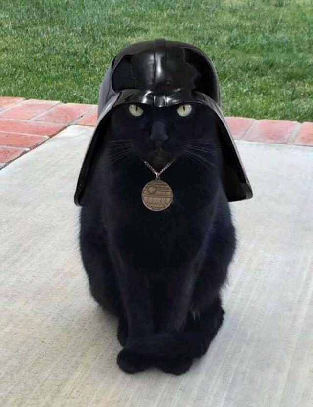 Sorry, but I've gone over to the dark side, so don't call me Fluffy any more, okay?