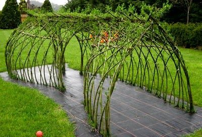 craftsmidwales: LIVING WILLOW TUNNEL