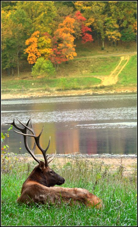 Just outside St. Louis, you'll find this beautiful park, where you can see Bison, Elk, and more! Lone Elk Park
