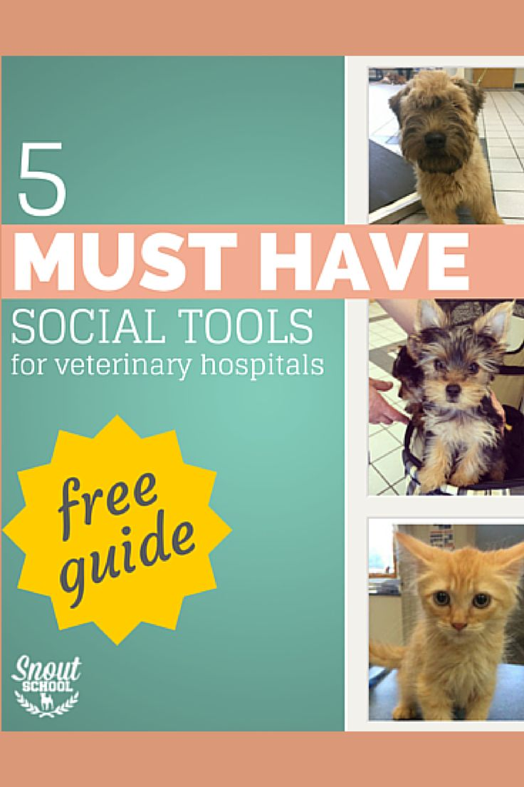 Veterinary hospitals need these social media tools - if you're a vet tech or veterinarian, get your FREE copy of this guide at SnoutSchool.com/Tools