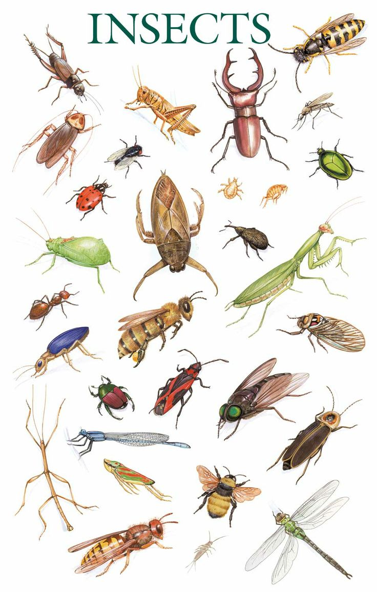 Insects, insects, insects