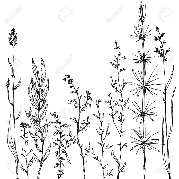 Line Art Flowers : Wild flower floral composition with ink drawing herbs and