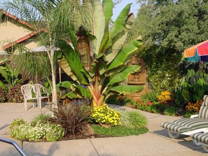 Den Garten können Sie mit einer tropischen Bananenstaude gestalten